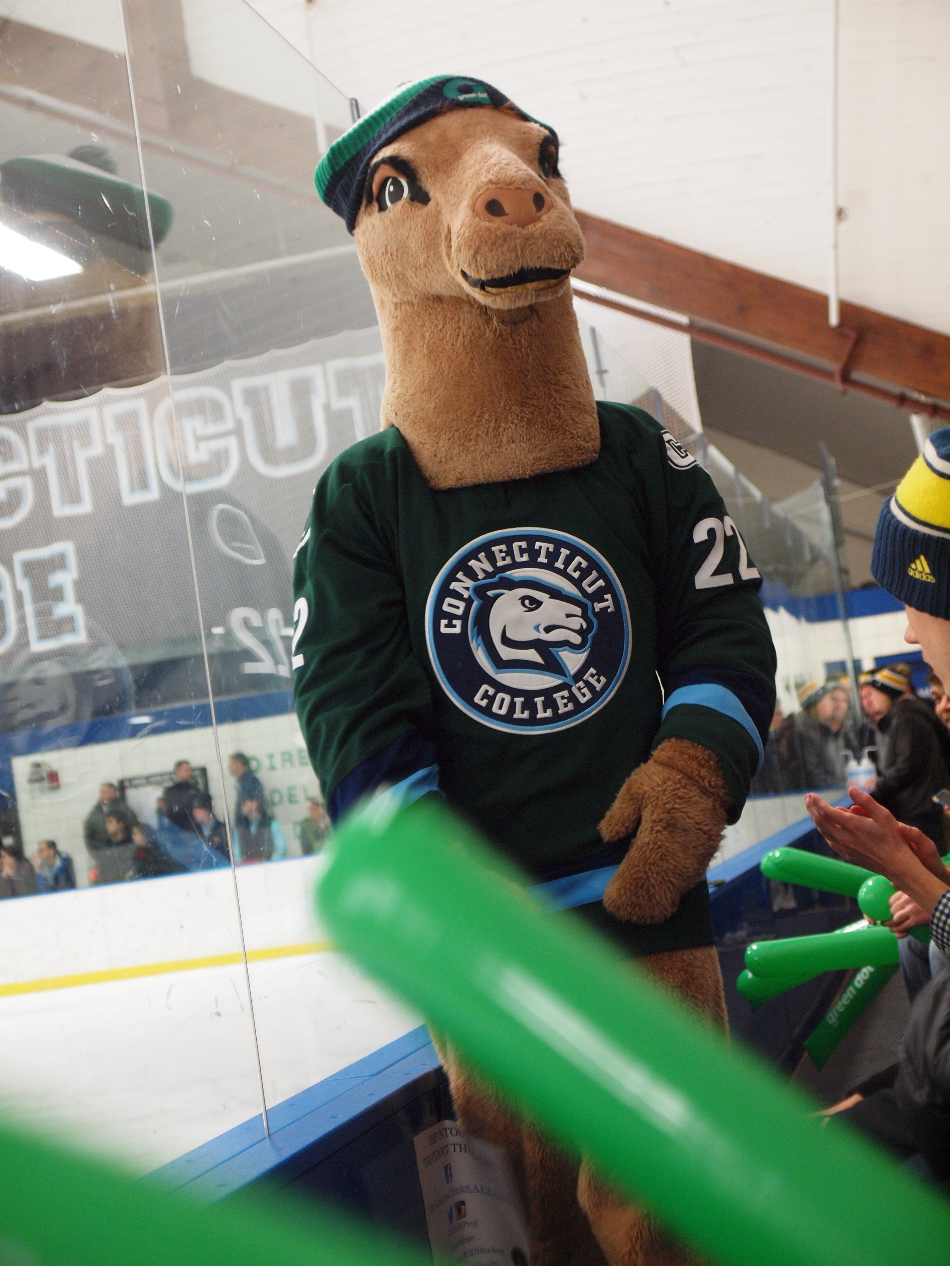 Conncoll's camel mascot wears a green jersey to raise awareness about sexual violence